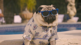 Vision Direct Summer Pug Film